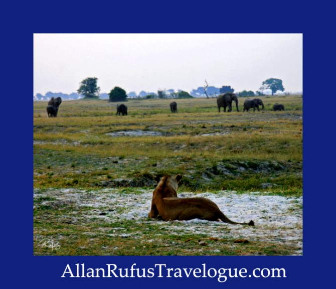 Travelogue - Allan Rufus. Botswana, Kasane,A lioness watching some elephants walking away from the Chobe River at sunset