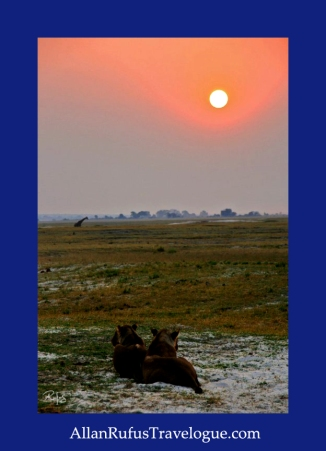 Travelogue - Allan Rufus. Botswana, Kasane, 2 lions watching a giraffe walking away from the Chobe River at sunset