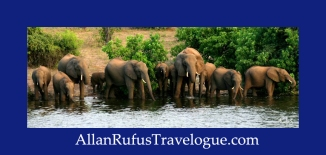 Travelogue - Allan Rufus. Botswana, Kasane, A herd of elephants drinking from the Chobe River