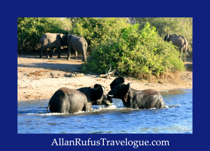 Travelogue - Allan Rufus. Botswana, Kasane, 2 Elephants playing in the Chobe River