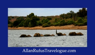 Travelogue - Allan Rufus. Botswana, Kasane, Elephants swimming across the Chobe River