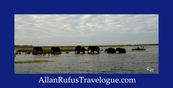 Travelogue - Allan Rufus. Botswana, Kasane, Elephants climbing out the water after swimming across the Chobe River