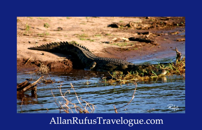 Travelogue - Allan Rufus. Botswana, Kasane, Another good reason why not to swim in the Chobe River after seeing this very large crocodile