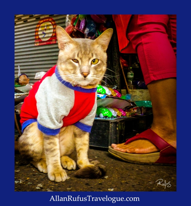 Street Photography - Sweat shirt Cat