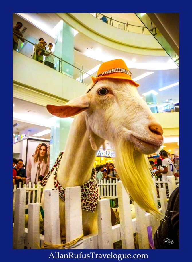 Street Photography - Billy goat gruff!